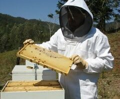 Professional beekeepers suit