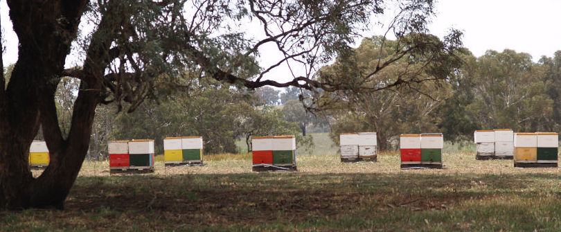 coloured bee hives