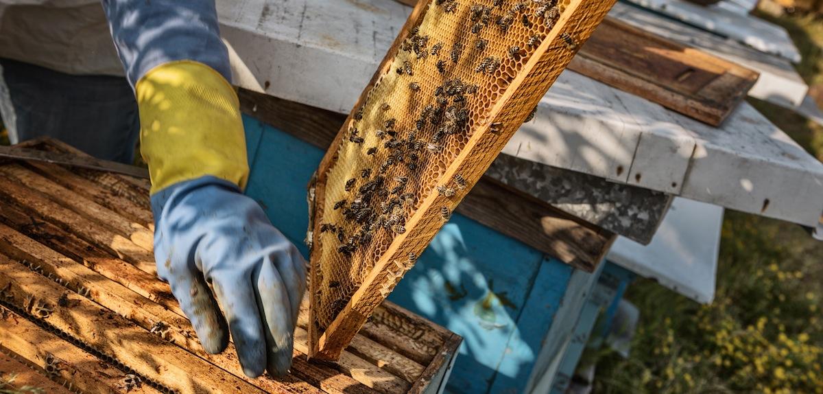 beekeeper hand