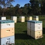 Hives and hive parts