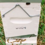 Complete Hives and Bee Colonies